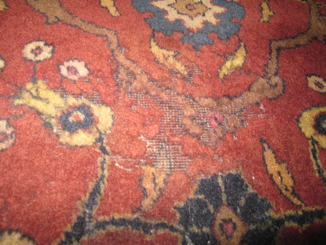 Hand-Knotted Rug Care: Preventing Moth Damage to Persian or